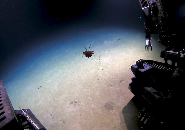 Una extraña criatura avistada en el golfo de México sorprende a los científicos
