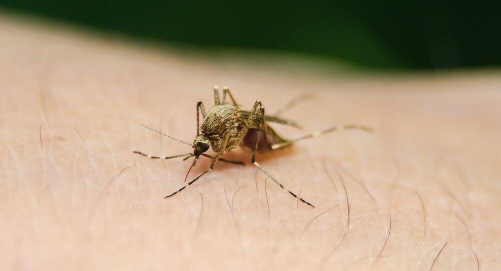 Un mosquito