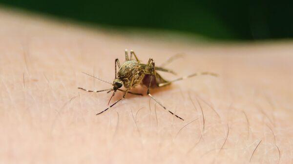 Un mosquito - Sputnik Mundo