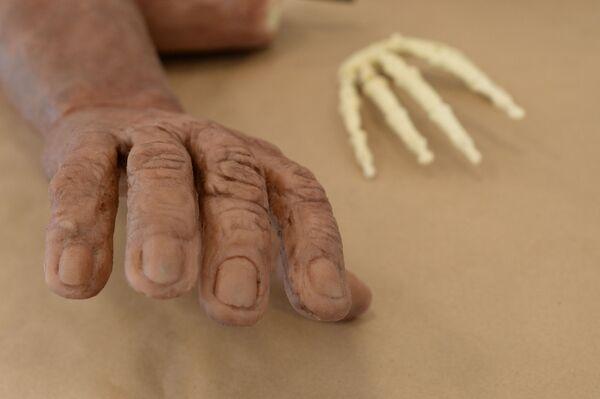 Скульптурная реконструкция рукиHomo naledi и муляж костей кистиHomo naledi, полученный методом 3D печати - Sputnik Mundo