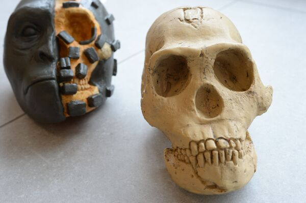 Натурная демонстрация метода скульптурной реконструкции на примере отливки черепаHomo nalediи половинной реконструкции - Sputnik Mundo