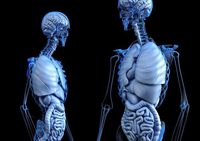 Cuerpo humano, imagen ilustrativa