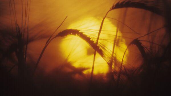 Una puesta del sol en el campo, imagen referencial - Sputnik Mundo