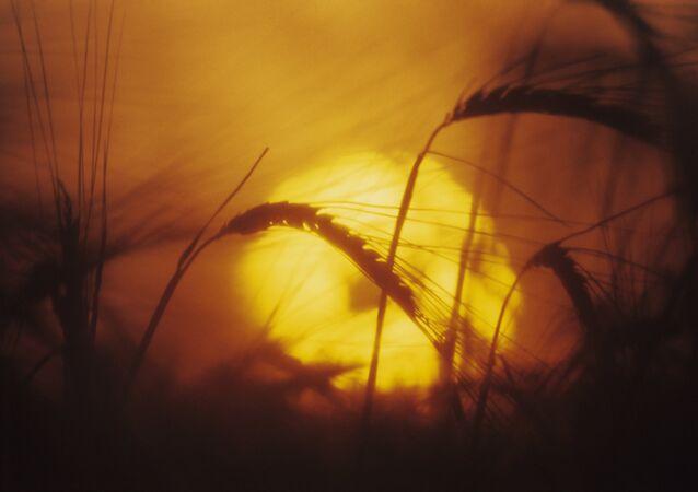 Una puesta del sol en el campo, imagen referencial
