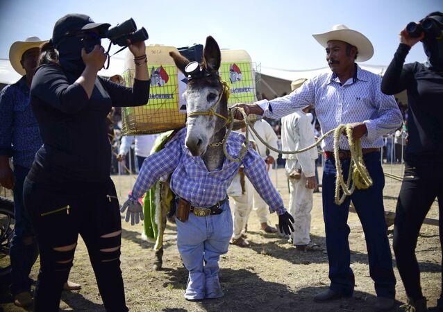 Feria Nacional del Burro en México