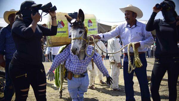 Feria Nacional del Burro en México - Sputnik Mundo