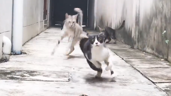 Un gato ninja le da toda una lección a tres maleantes - Sputnik Mundo