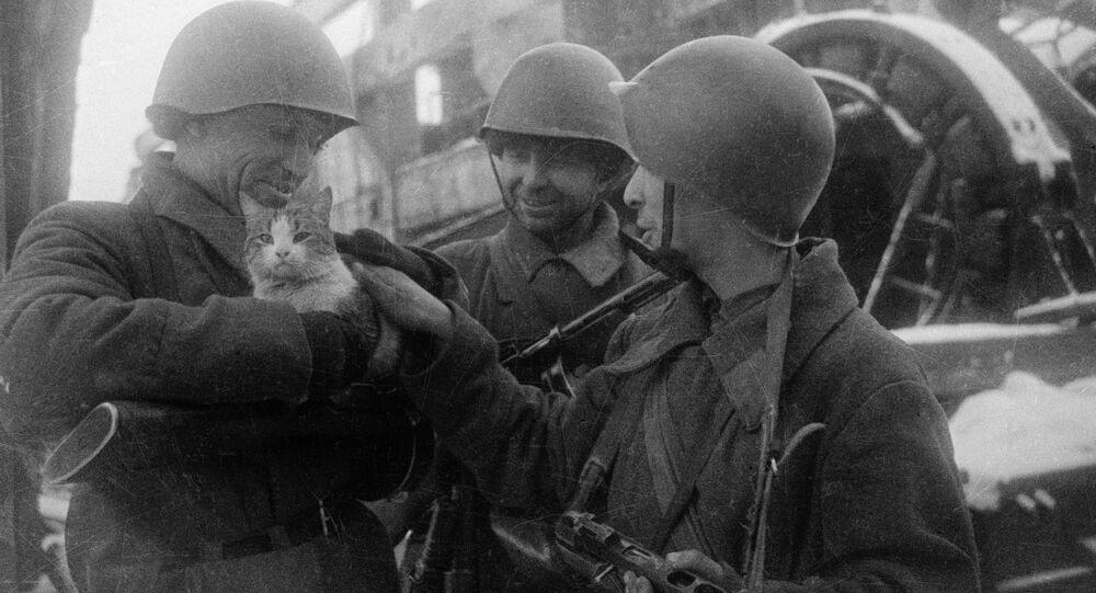 Soldados soviéticos con un gato durante la Gran Guerra Patria (archivo)