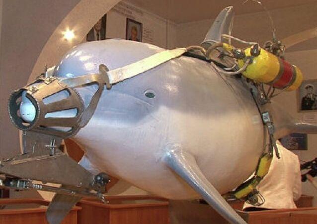 Equipo de combate de delfines crimeos