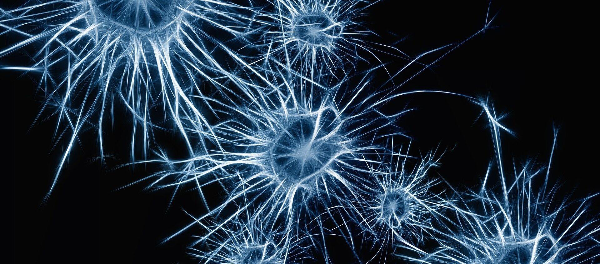 Neuronas (imagen referencial) - Sputnik Mundo, 1920, 19.01.2021