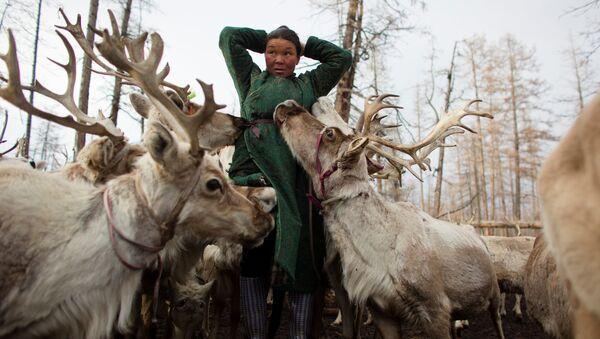 Cómo viven los últimos pastores de renos en Mongolia - Sputnik Mundo