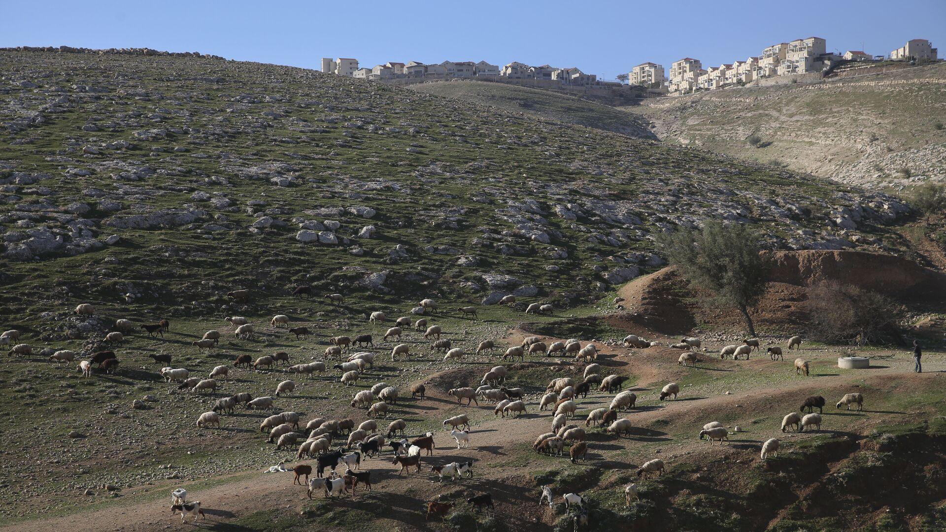 Un asentamiento israelí en Cisjordania - Sputnik Mundo, 1920, 06.05.2021