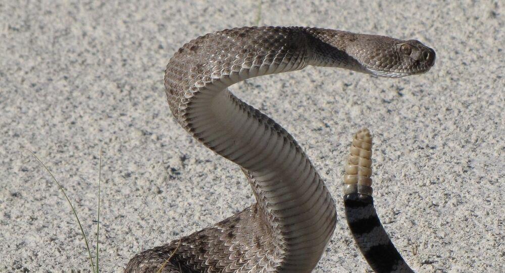 Una serpiente (imagen referencial)