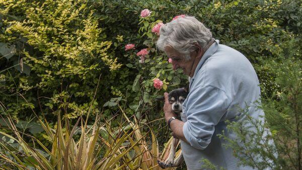 El expresidente de Uruguay, José Mujica, junto a su perra Manuela, en 2016 - Sputnik Mundo