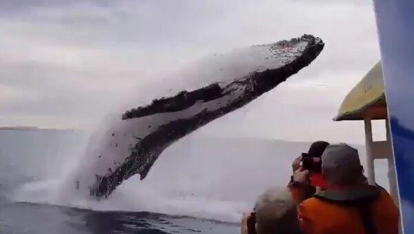 ¡Di hola! Una ballena impresiona a turistas con un salto acrobático - Sputnik Mundo