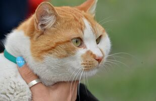 El gato Móstik