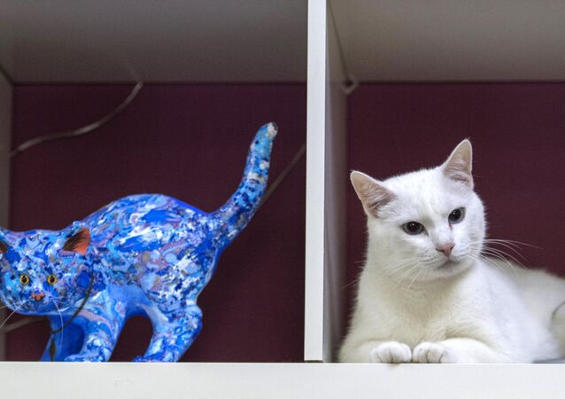 Aquiles, el gato-oráculo del Mundial de Rusia
