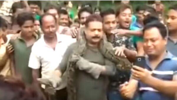 Un pitón estrangula a un hombre en India - Sputnik Mundo