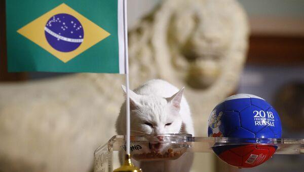 El gato Aquiles predice resultados del partido entre Brasil y Costa Rica - Sputnik Mundo