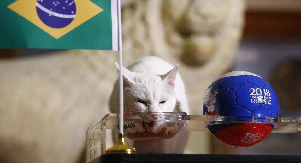 El gato Aquiles predice resultados del partido entre Brasil y Costa Rica