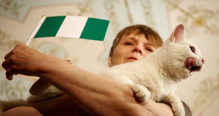 El gato Aquiles predice resultados del partido entre Nigeria y Argentina