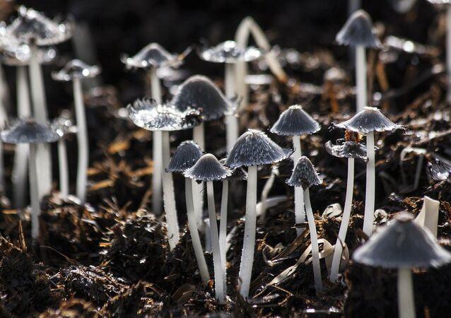 Unos hongos, referencial