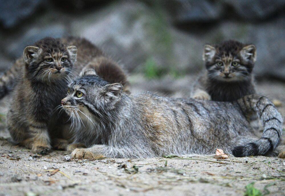 Los carnívoros más tiernos de toda Rusia