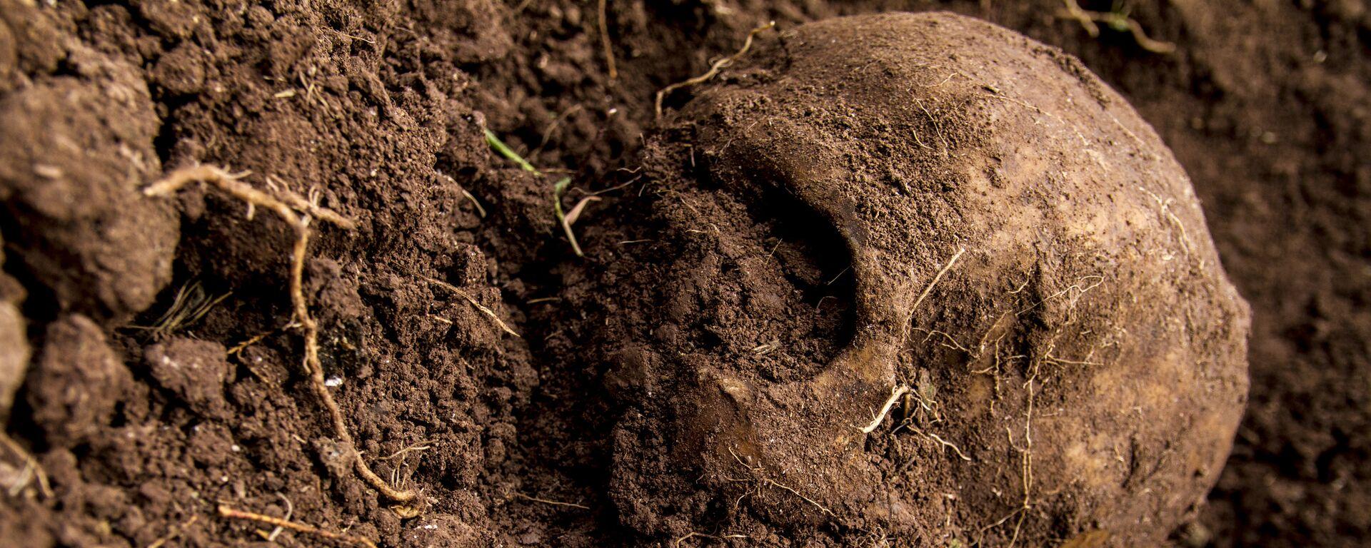 Cráneo hallado en una fosa  - Sputnik Mundo, 1920, 09.06.2021