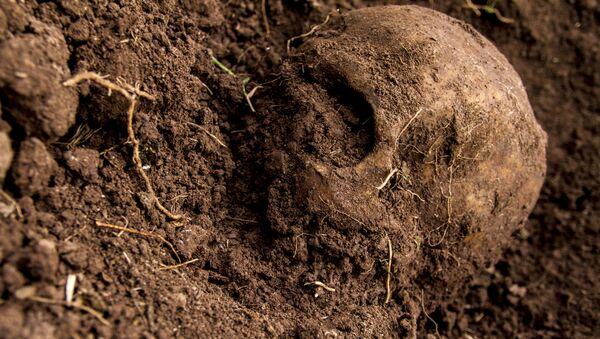 Cráneo hallado en una fosa clandestina (imagen referencial) - Sputnik Mundo