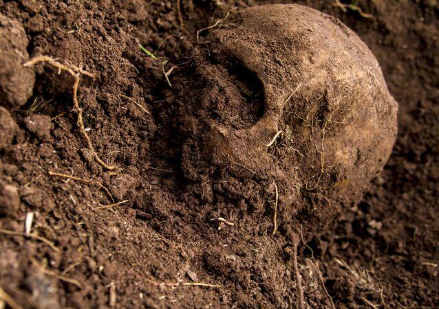 Cráneo hallado en una fosa clandestina (imagen referencial)
