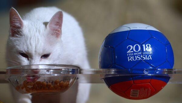 Кот Ахилл предсказал победу сборной Бельгии над сборной Англии в матче ЧМ-2018 по футболу - Sputnik Mundo