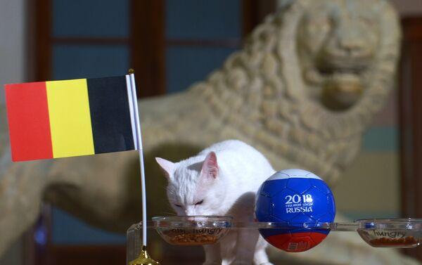 El gato oráculo del Hermitage hace sus predicciones del partido por el bronce - Sputnik Mundo