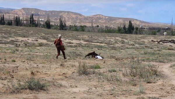 Ataque de un águila en Kirguistán - Sputnik Mundo
