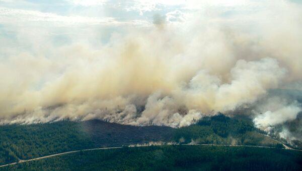Incendios forestales en Suecia - Sputnik Mundo
