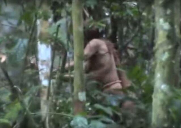El último miembro de la tribu de Tanaru, captura de imágen
