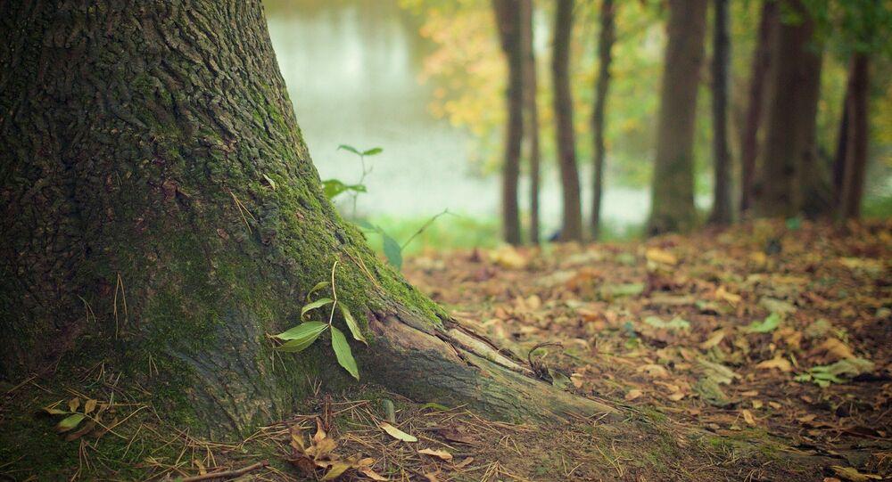 Un árbol (imagen referencial)