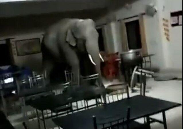 Un elefante en el comedor de una base militar india