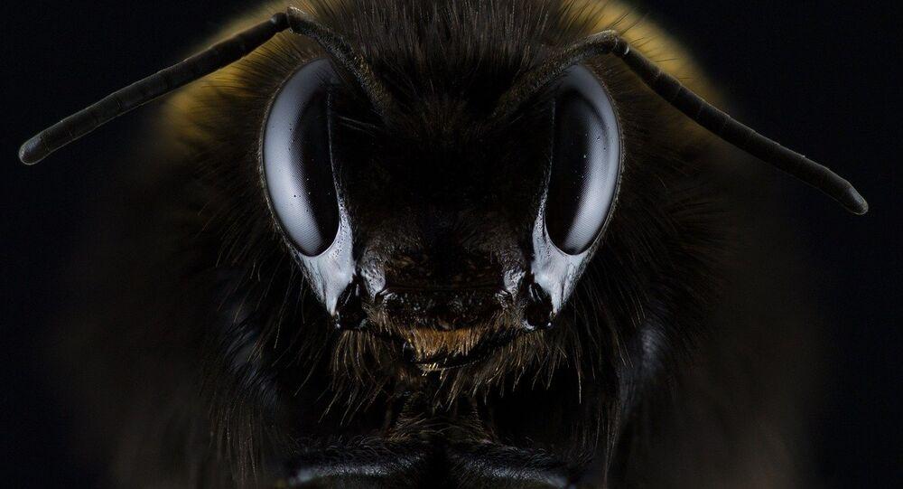 un insecto