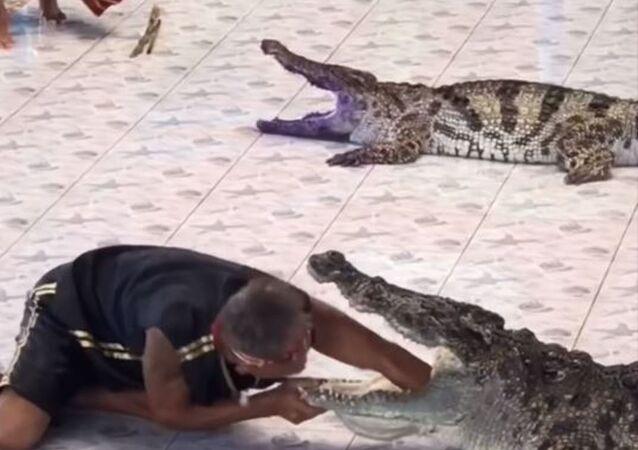 Un domador mete la mano en la boca de un cocodrilo y esto es que le pasa (fuertes imágenes)