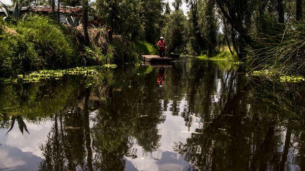 Campesino en el canal de Xochimilco el último lago de la Ciudad de México - Sputnik Mundo