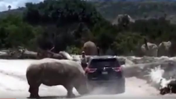 Rinoceronte ataca con furia a un vehículo familiar en zoo mexicano - Sputnik Mundo