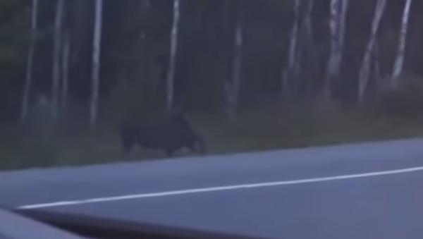Una familia avistó una extraña criatura en una remota selva de Canadá - Sputnik Mundo