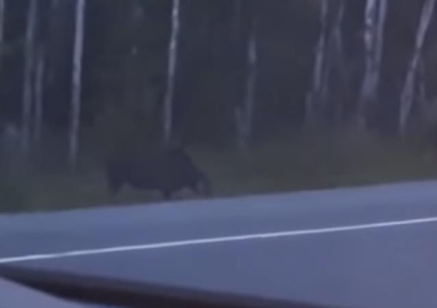 Una familia avistó una extraña criatura en una remota selva de Canadá