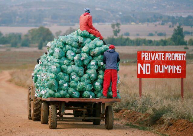 Trabajadores agrícolas cosechan col en una granja en Eikenhof, cerca de Johannesburgo, Sudáfrica