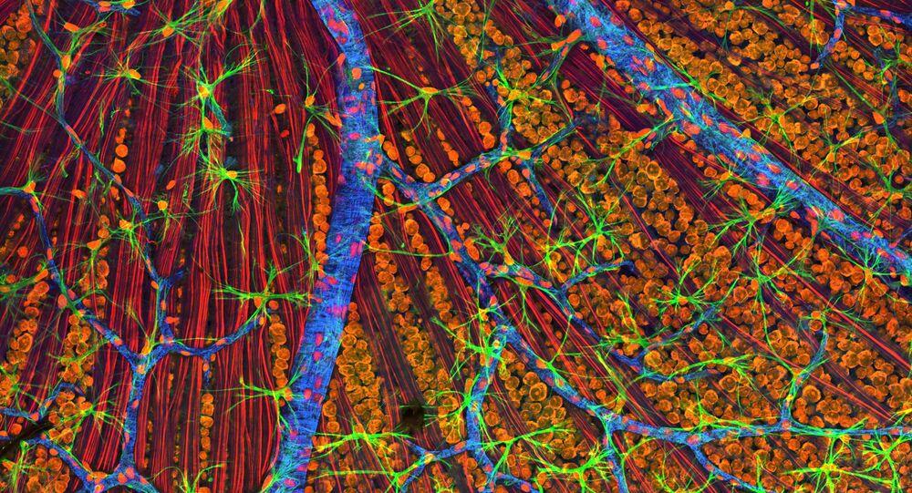 Células, imagen ilustrativa