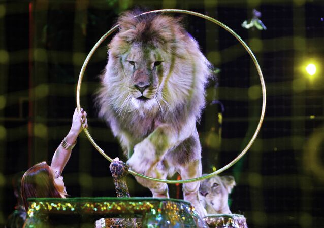 Un león en circo (Archivo)