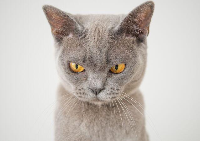 Un gato (imagen referencial)