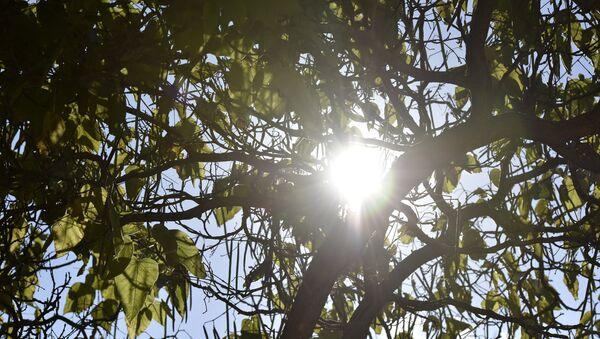 Un árbol (Archivo) - Sputnik Mundo
