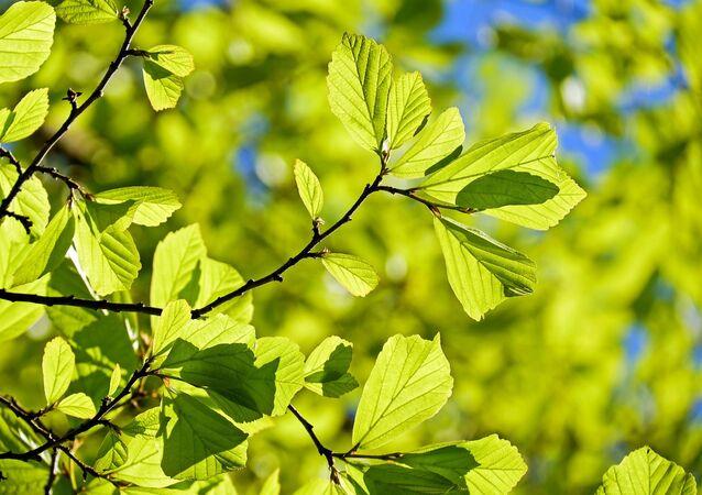 Plantas (imagen ilustrativa)