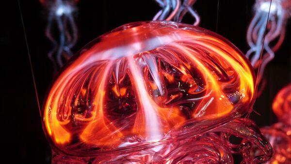 Una medusa, imagen ilustrativa - Sputnik Mundo
